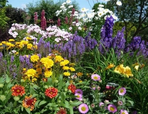Containerrosen und Blütenstauden in Bestform
