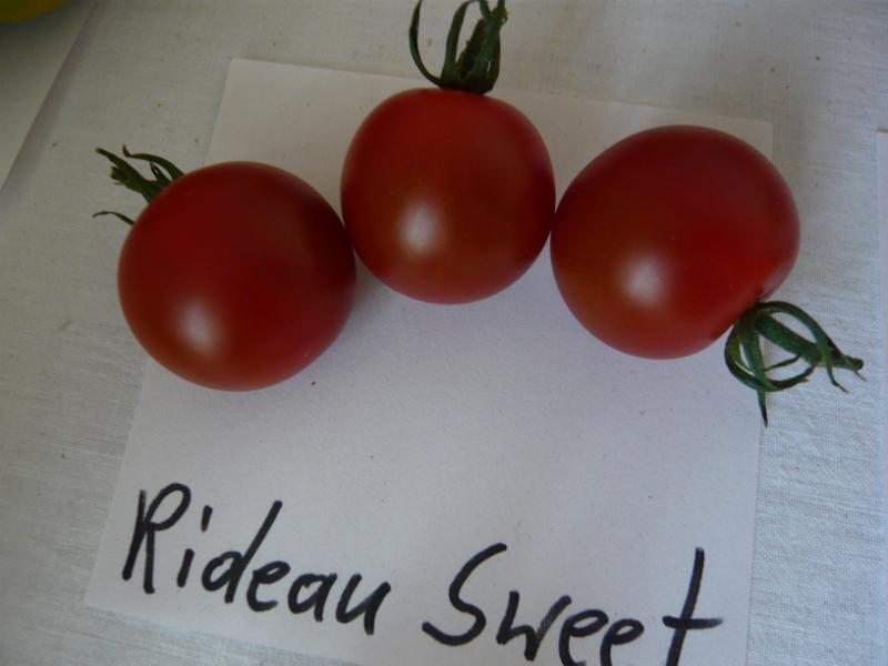 Rideau Sweet