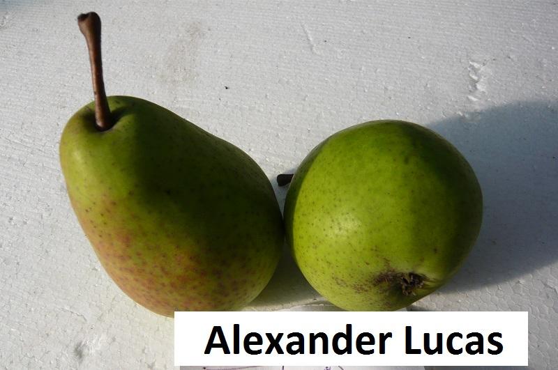 Alexander Lucas