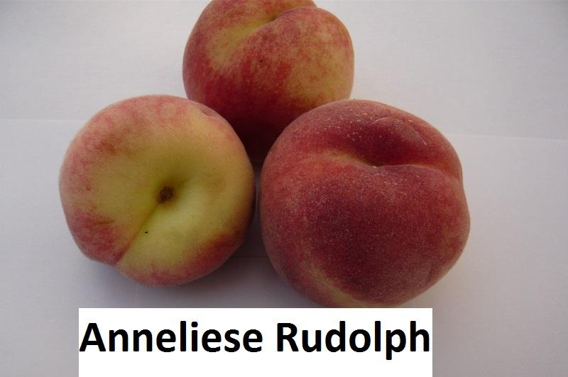 Anneliese Rudolph