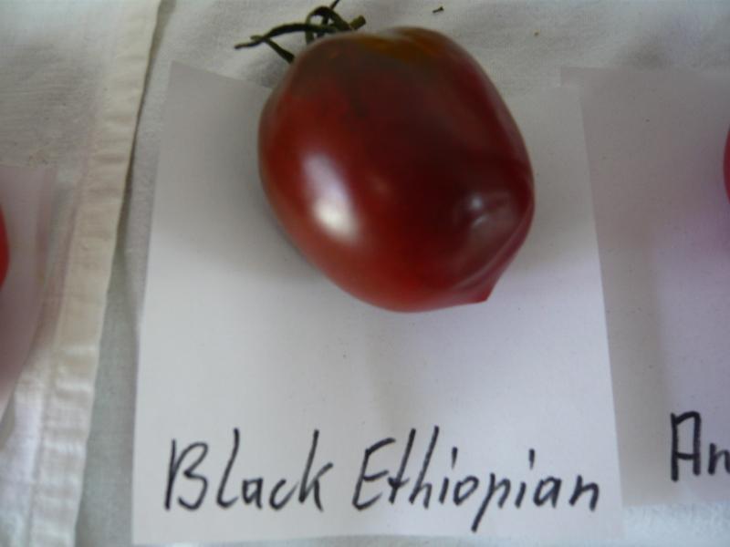 Black Ethiopian