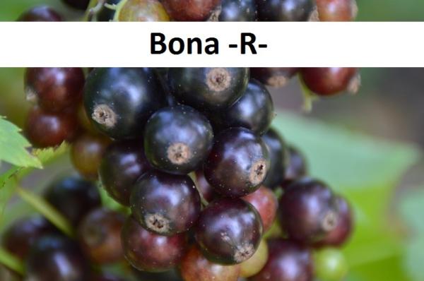 Bona -R-