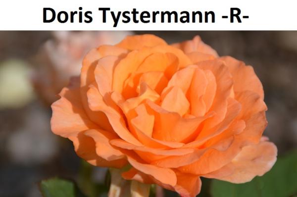 Doris Tystermann