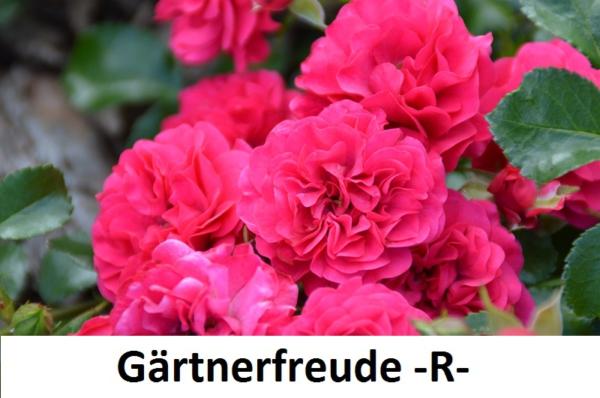 Gärtnerfreude