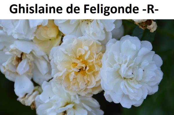 Ghislaine de Feligonde