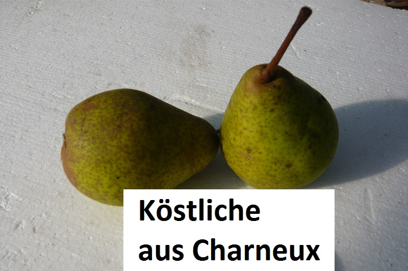 Köstliche aus Charneux
