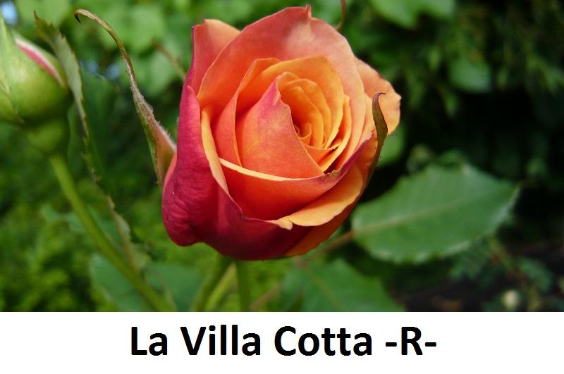 La Villa Cotta