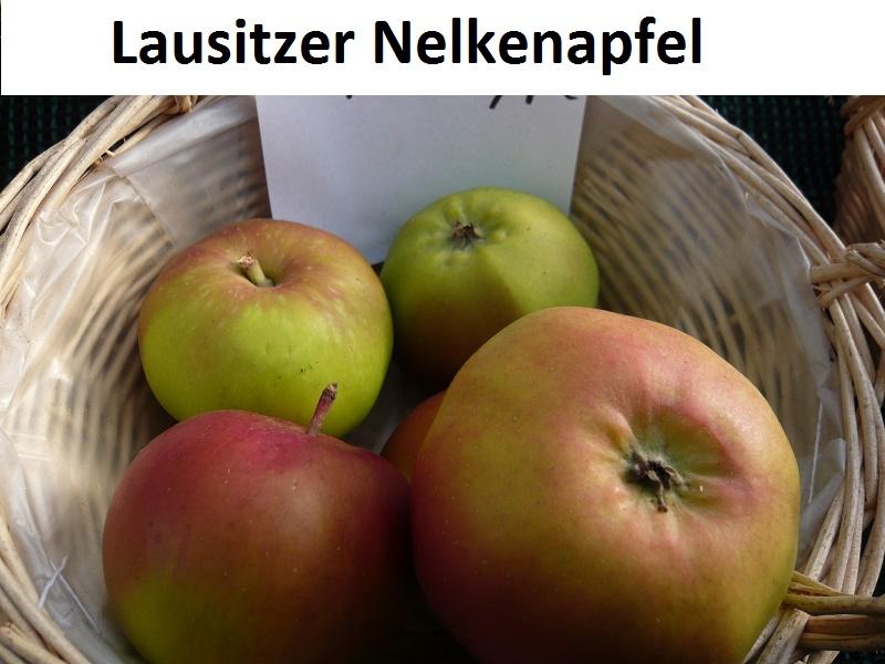 Lausitzer Nelkenapfel