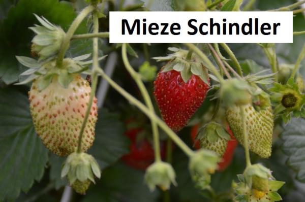 Mieze Schindler