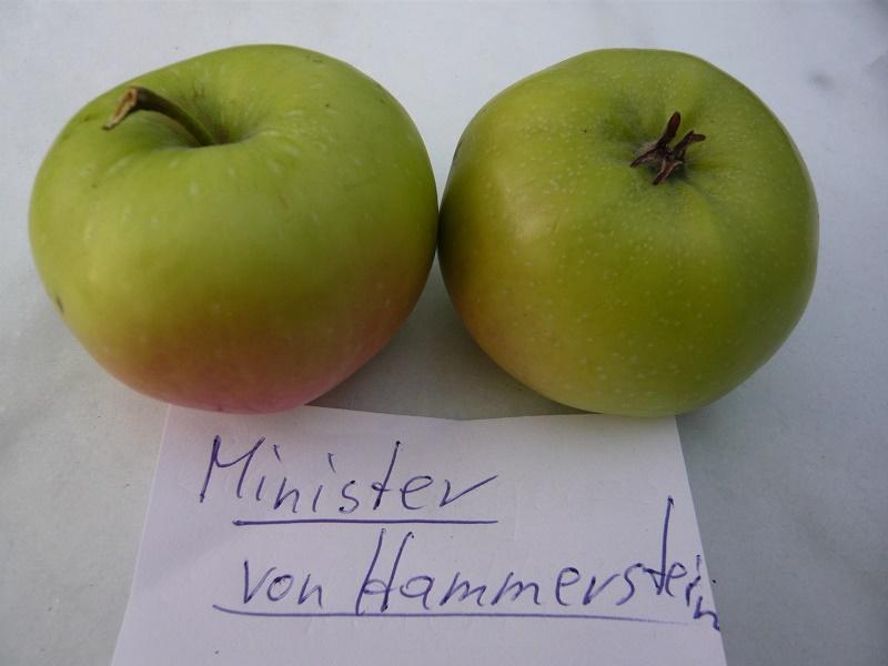 Minister von Hammerstein