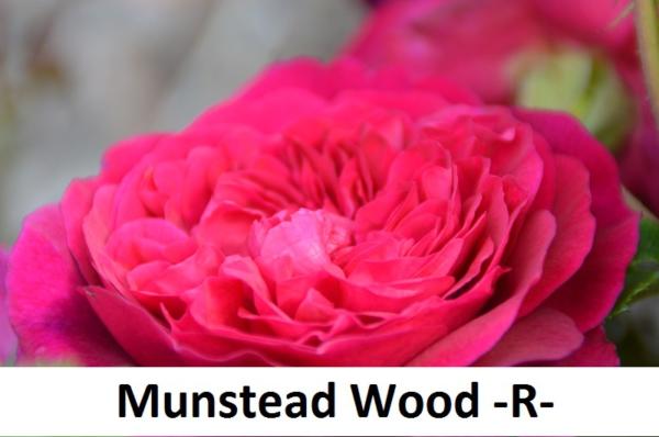 Munstead Wood
