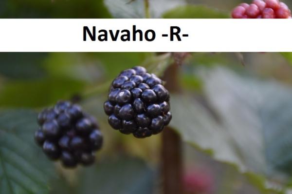 Navaho