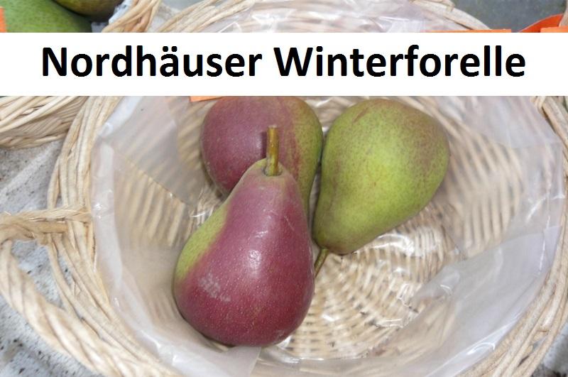 Nordhäuser Winterforelle