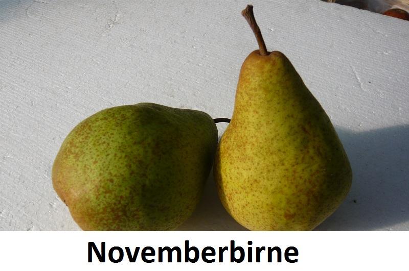Novemberbirne