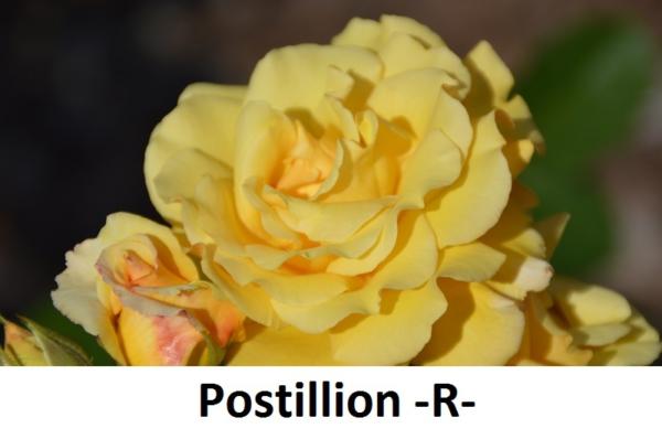 Postillion