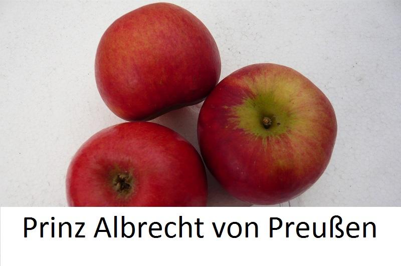 Prinz Albrecht von Preußen