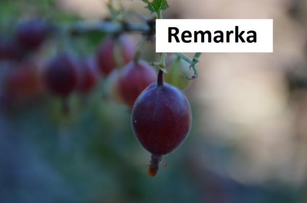Remarka