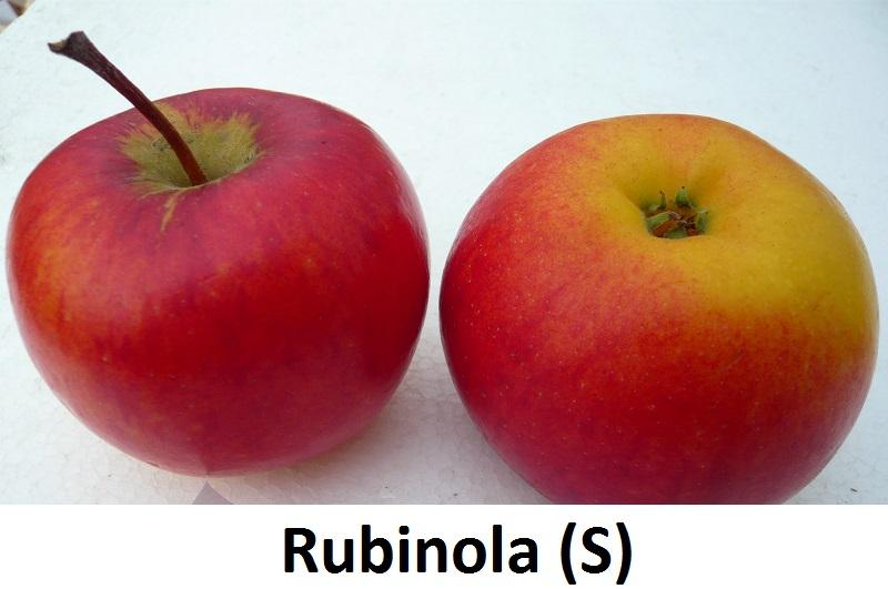 Rubinola