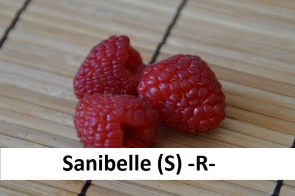 Sanibelle