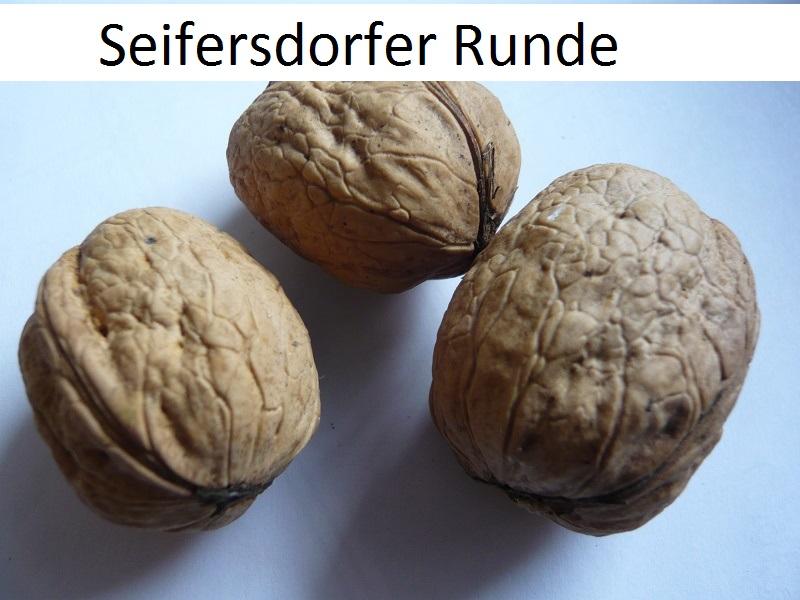 Seifersdorfer Runde
