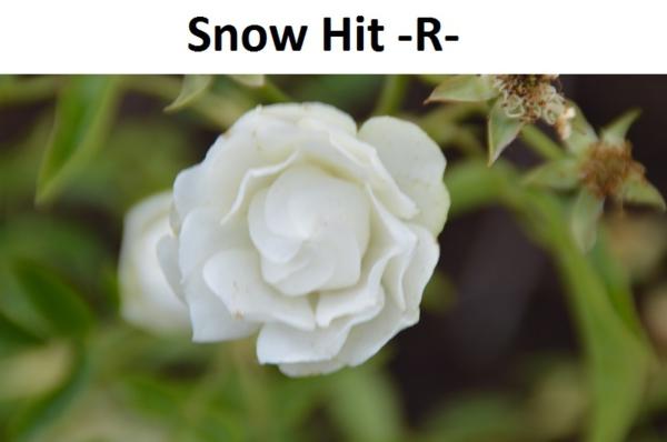 Snow Hit