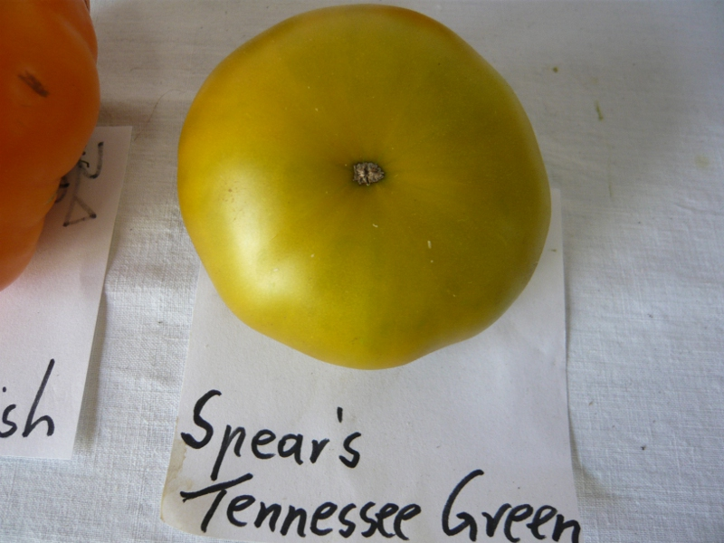 Spear's Tennessee Green