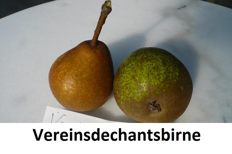 Vereinsdechantsbirne