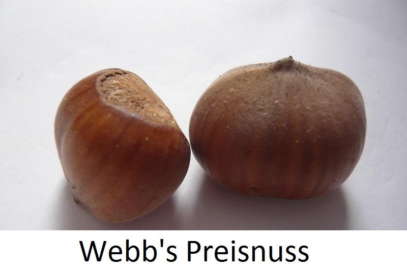 Webbs Preisnuss