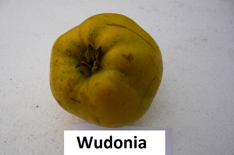 Wudonia
