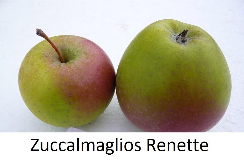 Zuccalmaglios Renette