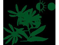 Blütenstauden – halb-/schattiger Standort
