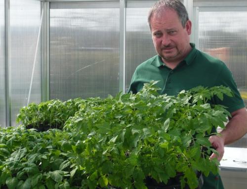 Tomatenpflanzen mit Sortimentsliste-Gemüsejungpflanzen-Gurkenpflanzen für das Gewächshaus