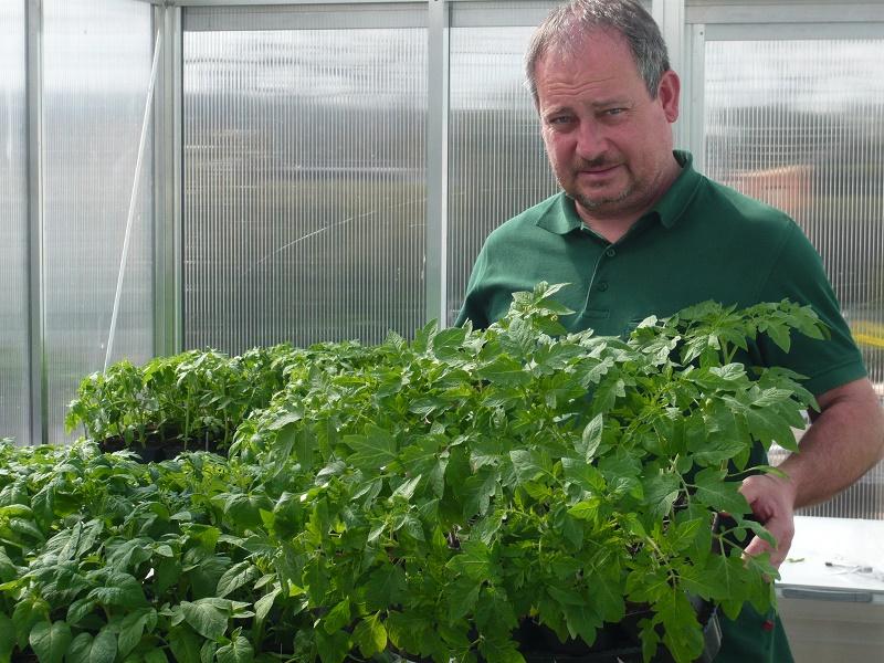 tomatenvielfalt in 150 sorten tipps zur pflanzung und. Black Bedroom Furniture Sets. Home Design Ideas