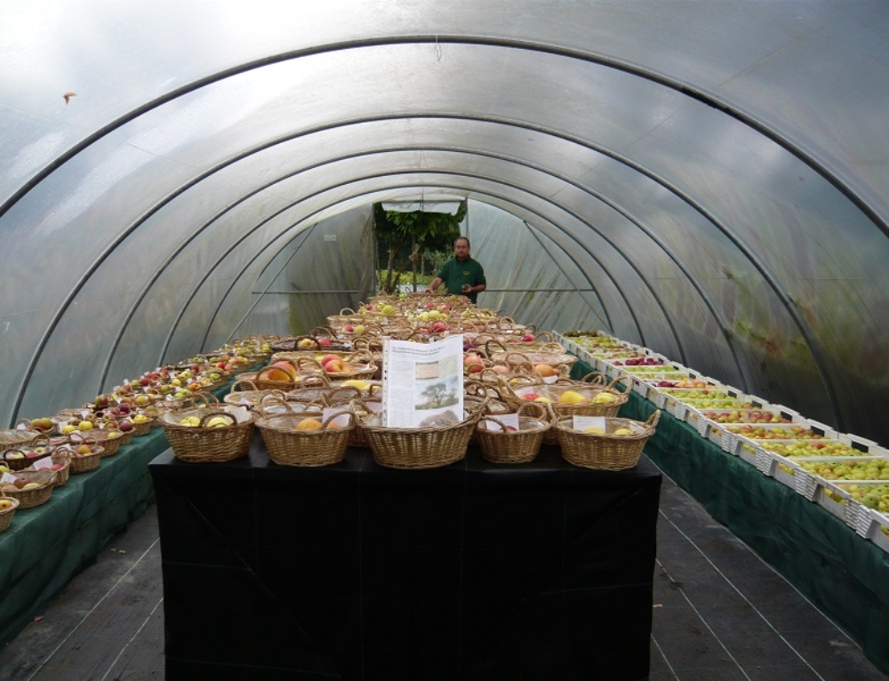 Apfelausstellung mit 200 Sorten bis Ende November