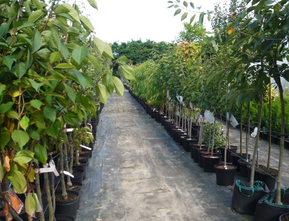 Obstbäume und Ziersträucher im Frühherbst