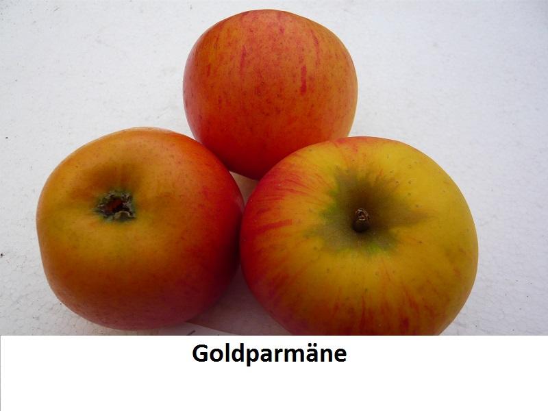 Goldparmäne