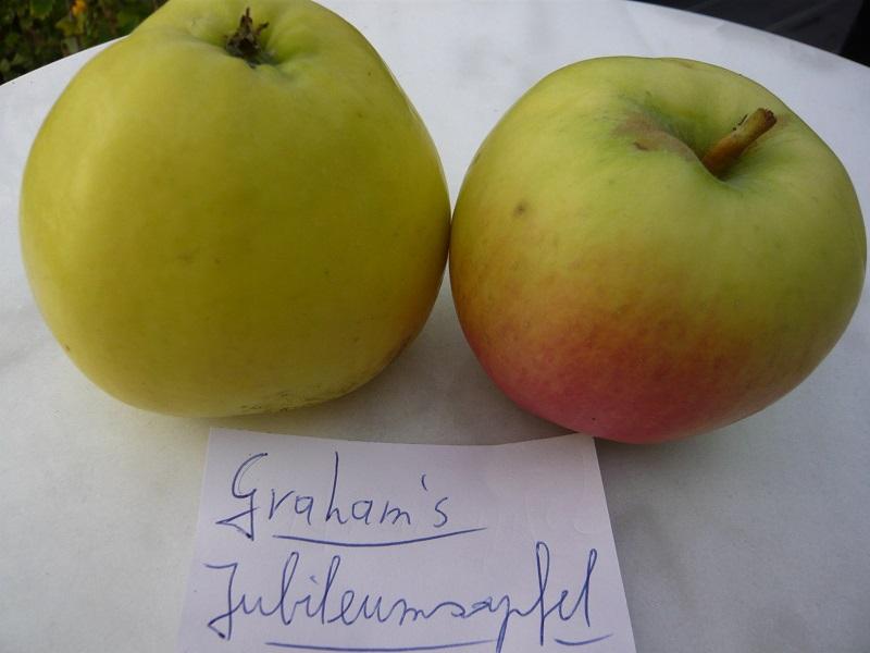 Grahams Jubiläumsapfel