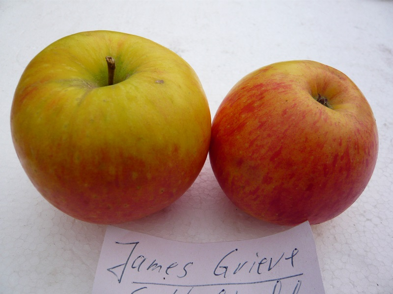 James Grieve