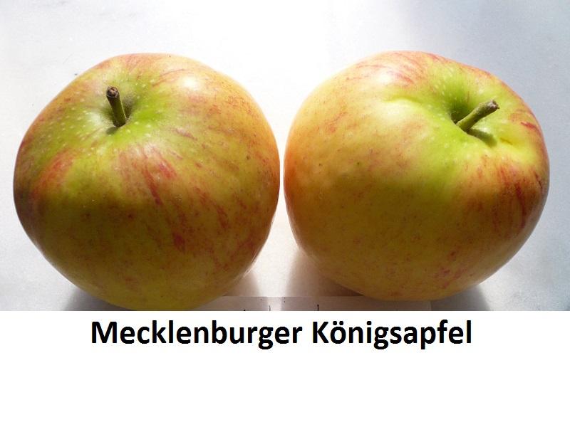 Mecklenburger Königsapfel