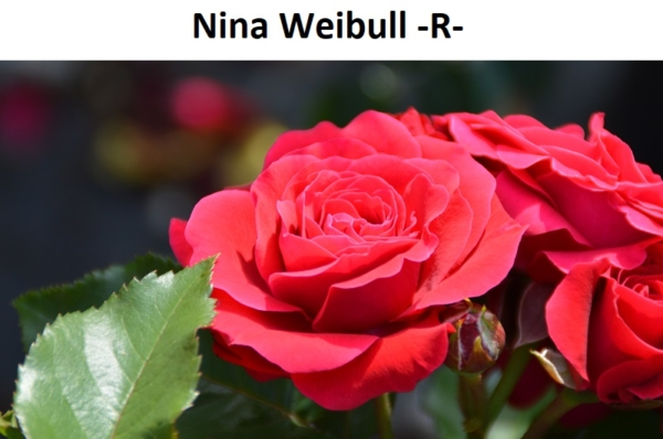 Nina Weibull