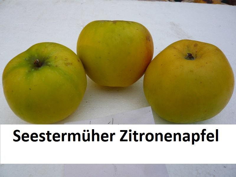 Seestermüher Zitronenapfel