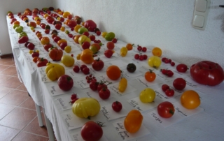 Tomatenausstellung
