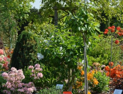 Botanischer Garten im Sommer – mit allen Sinnen genießen