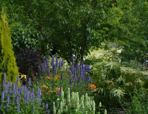 Stauden, Gräser, Rhododendren und Ziersträucher – Tophits im Herbst bei uns