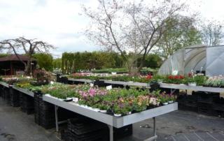 Beet- und Balkonpflanzen 2018