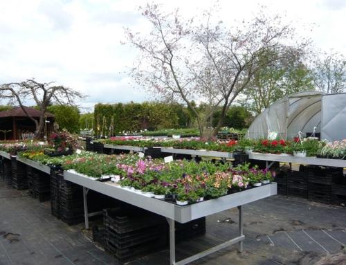 Beet- und Balkonpflanzen 2019