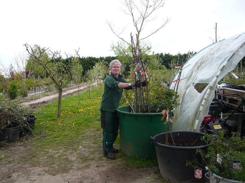 Frau Paeth sortiert Obstbäume