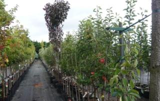 Containerobstbäume 2018