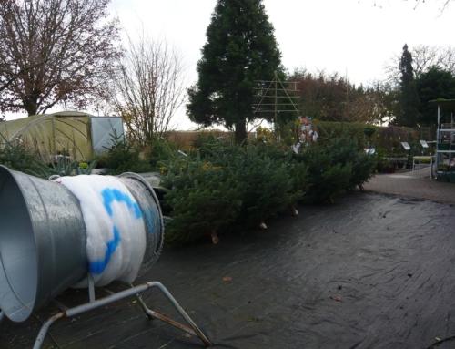 Weihnachtsbaumverkauf bis zum 15. Dezember