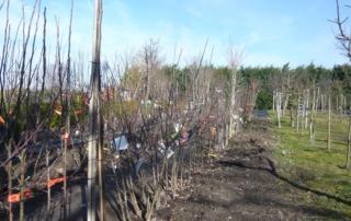 Obstbaumeinschlag Frühjahr 2019